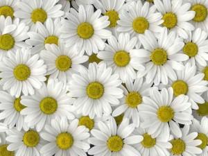 ricette-fiori