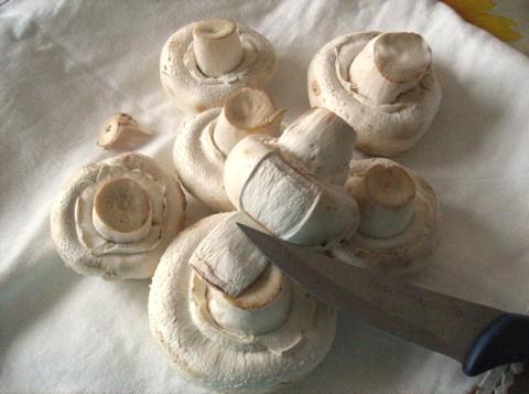 champignons privati della pellicina
