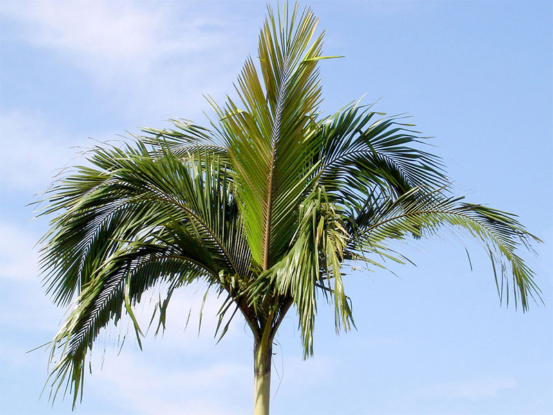 Olio di cocco fa bene o fa male ?